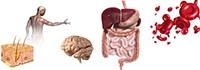 Infinite Progress Nutrition - Therapies - Auto-Immunology - Immune Disorders